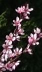 Frühlingsblütenpracht