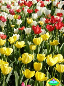 Blumenfülle